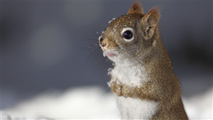Lovely Photo of Squirrel Baby