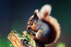 Photography of Animal Squirrel