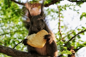 Squirrel Eating Photo