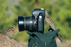 Squirrel Near Camera Photo