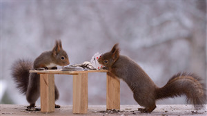 Squirrel Playing Cards Funny Wallpaper