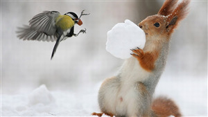 Squirrel Playing with Bird Sparrow