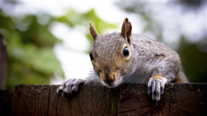 Squirrel Shocking Face Image