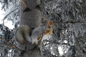 Squirrel on Tree During Winter Season Image