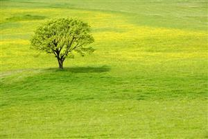 A Tree in Greenery Summer Wallpaper