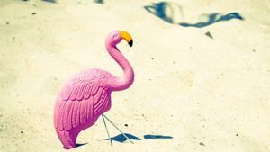 Flamingo Toy Stick in Beach Summer Vacation Photos