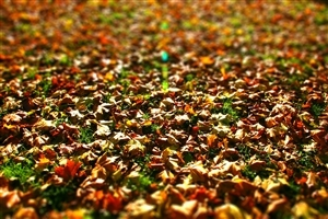 Amazing Nice Autumn Leaves Wallpapers Free Download