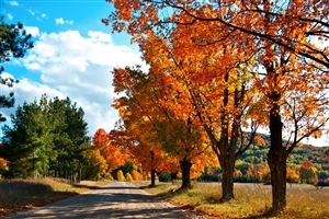 Autumn Trees Beside Road Nature HD Wallpapers