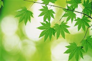 Beautiful Designs of Green Leaves