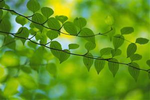 Beautiful Small Green Leavs Row Wallpaper