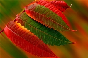Red and Green Leaves HD Wallpaper