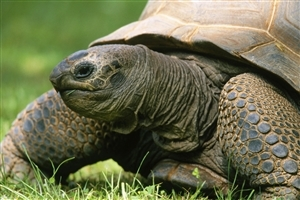 CloseUp Pics of Animal Turtle