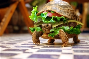Funny Burger Type Turtle Photo