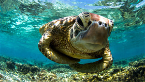 Turtle Close Up Face in Sea