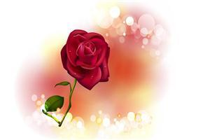 Red Rose on Valentine Day