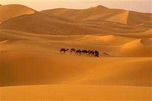 A Camels in Beautiful Desert Wallpapers