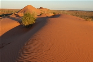 Gobi Desert Wallpaper